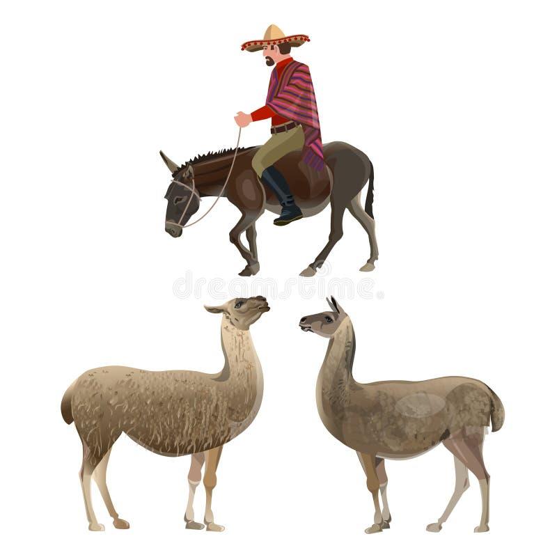 Alpaca Day  National Holiday In Peru  Alpaca Lies Stock
