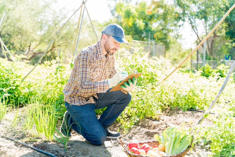 Farmer Making Notes Of Vegetables In Farm royalty free stock images