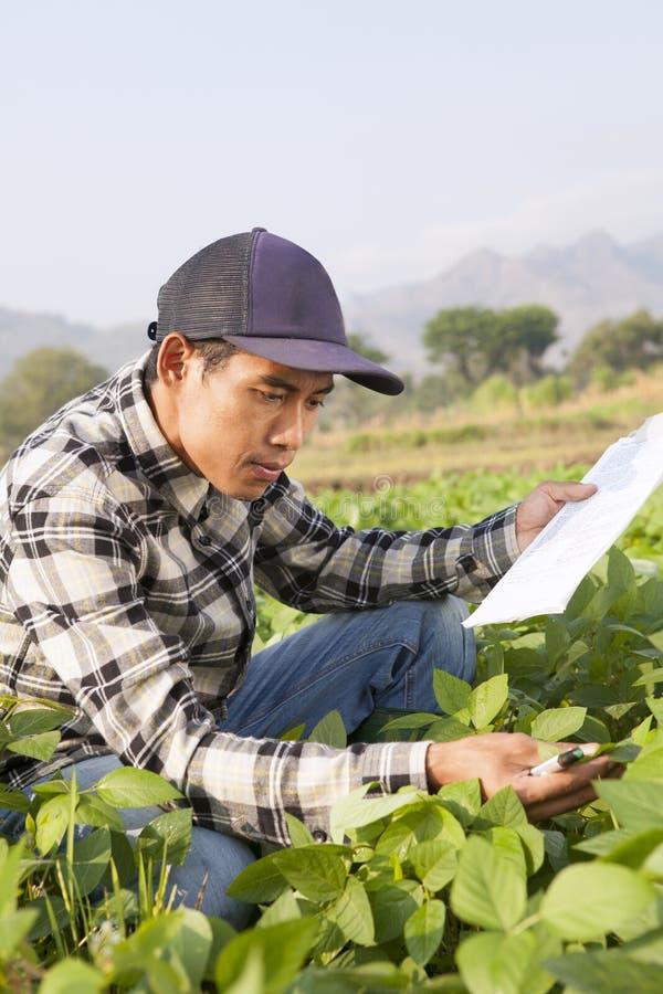 Farmer man royalty free stock image