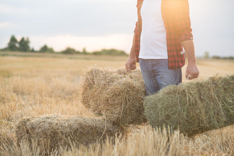 Farmer man with straw bales stock image
