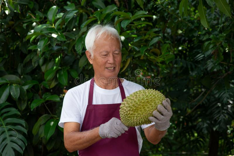 Farmer and musang king durian royalty free stock photos