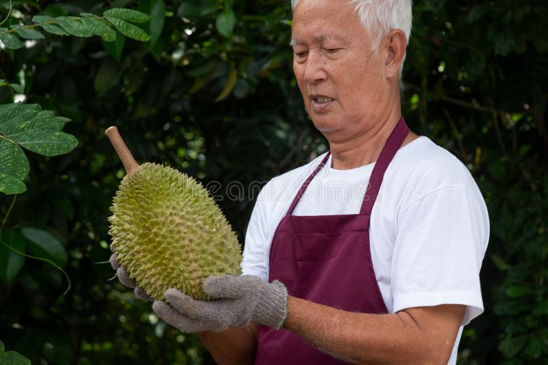 Farmer and musang king durian royalty free stock photo