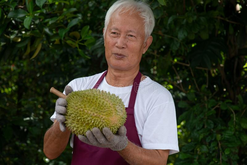 Farmer and musang king durian royalty free stock photography