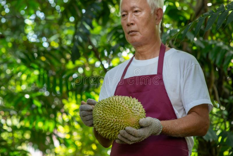 Farmer and musang king durian stock photography