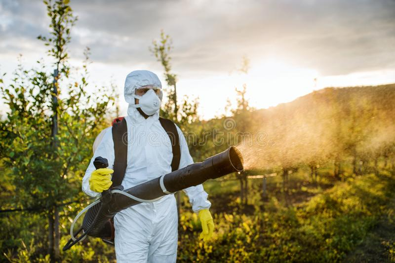 A farmer outdoors in orchard at sunset, using pesticide chemicals. royalty free stock photos