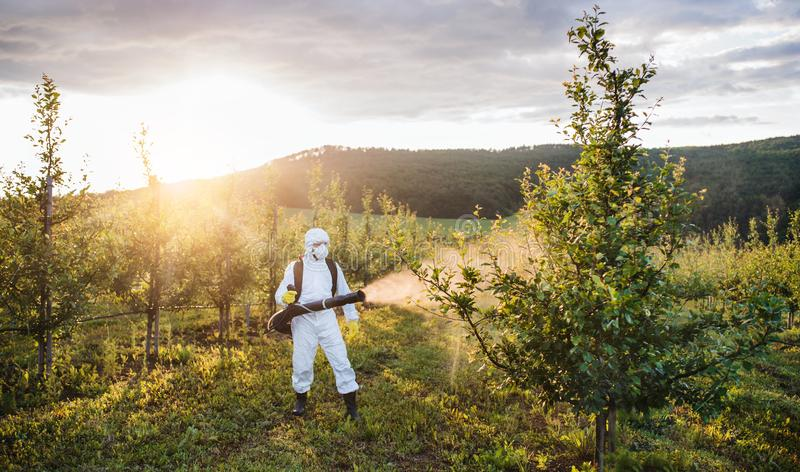 A farmer outdoors in orchard at sunset, using pesticide chemicals. A farmer in protective suit walking outdoors in orchard at sunset, using pesticide chemicals royalty free stock images