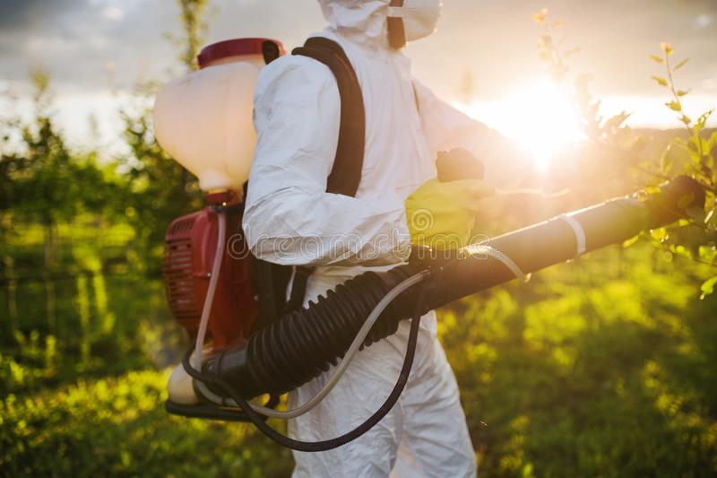 A farmer outdoors in orchard at sunset, using pesticide chemicals. royalty free stock images