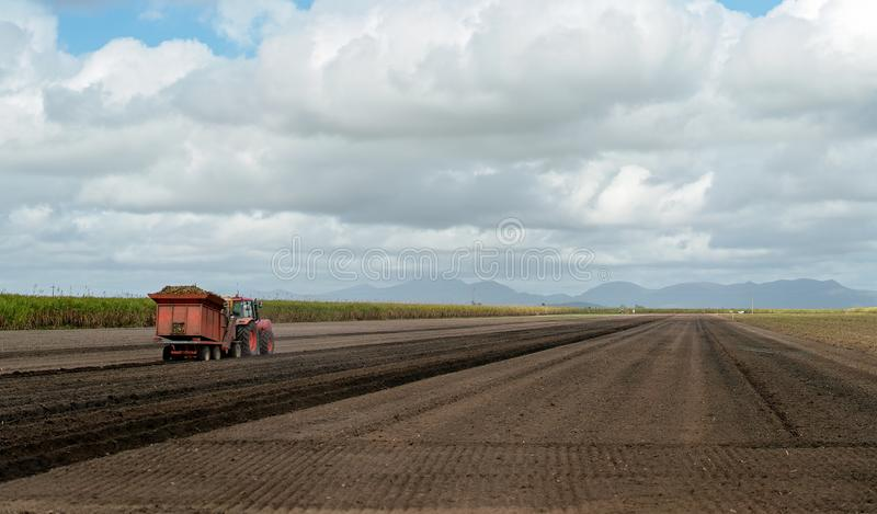 Farmer Planting Sugar Cane In A Plowed Field. A farmer planting sugar cane in a plowed field on a sugarcane plantation stock images