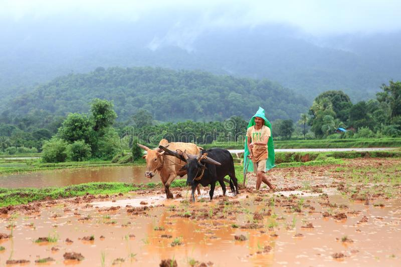 Farmer plowing agricultural field, Karnataka royalty free stock photography