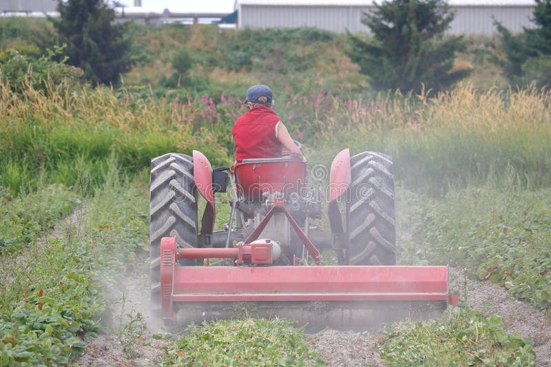 Farmer Plowing Her Field royalty free stock photography