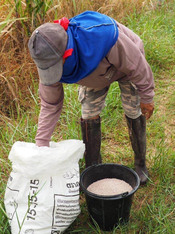 A farmer pours fertilizer in a bucket stock photography