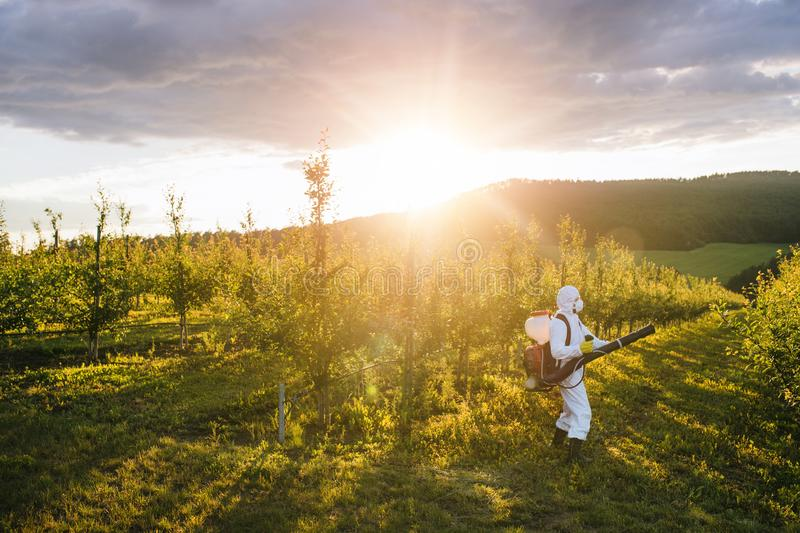 A farmer outdoors in orchard at sunset, using pesticide chemicals. stock images