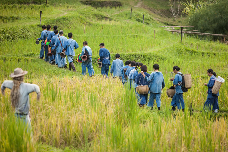 Farmer in rice filed at chiangmai province stock photos