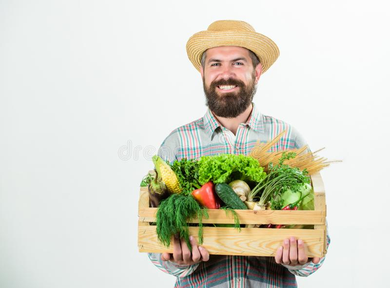 Farmer rustic bearded man hold wooden box with homegrown vegetables white background. Farmer guy carry harvest. Locally. Grown foods. Farmer lifestyle royalty free stock photo