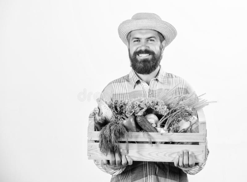 Farmer rustic bearded man hold wooden box with homegrown vegetables white background. Farmer guy carry harvest. Locally. Grown foods. Farmer lifestyle royalty free stock image