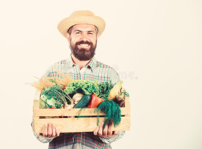 Farmer rustic bearded man hold wooden box with homegrown vegetables white background. Farmer guy carry harvest. Locally. Grown foods. Farmer lifestyle stock photography