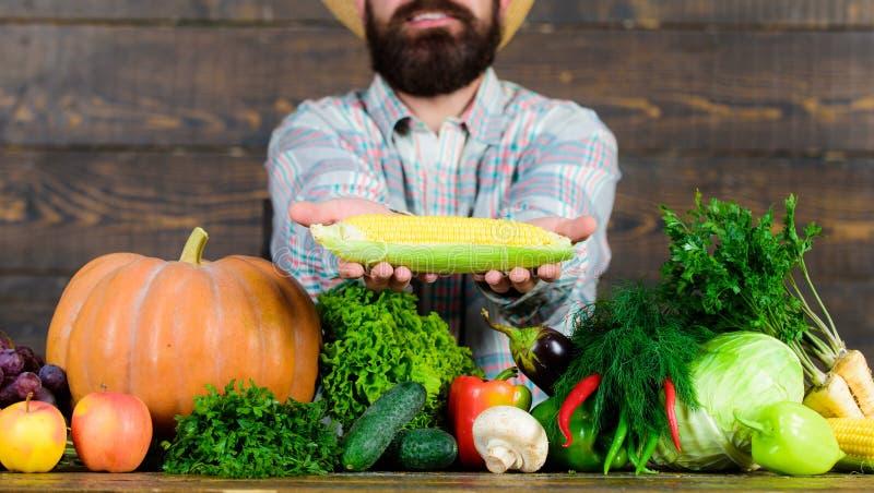 Farmer rustic villager appearance. Grow organic crops. Farmer straw hat presenting fresh vegetables. Man cheerful royalty free stock photo