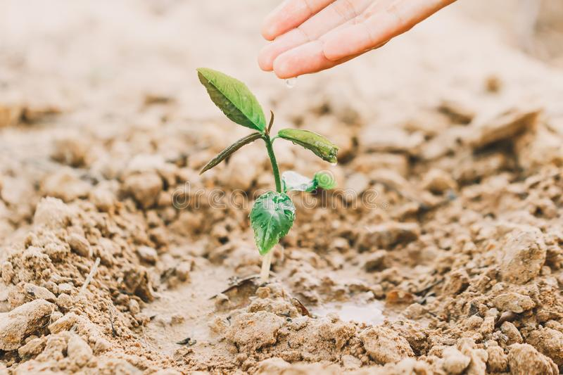 Farmer`s hand watering a young plant on green bokeh nature. royalty free stock photos