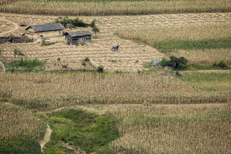 Farmer's houses in the middle of corn field. Farmer's houses in the middle of a piece of field stock photography