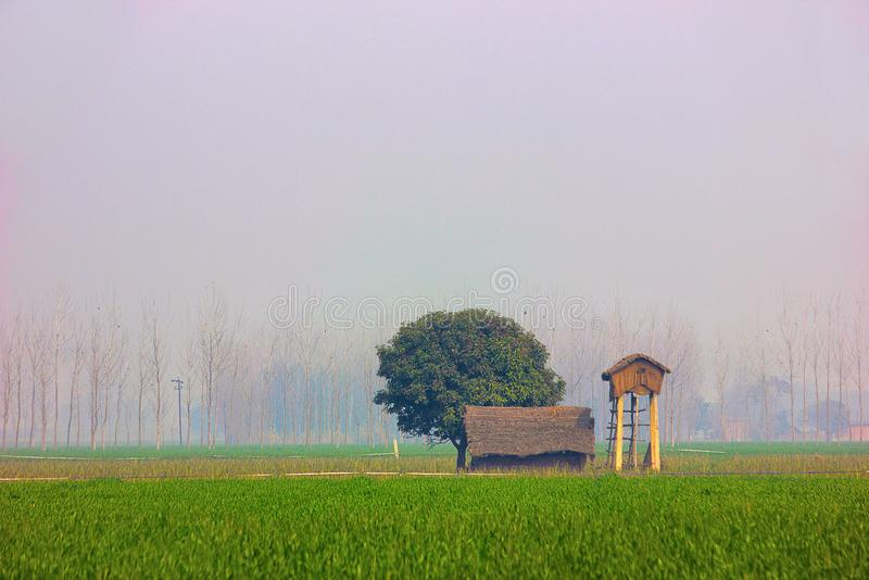 Farmer`s hut and fields, Dudhwa National Park, Uttar Pradesh. Farmer`s hut and fields, Dudhwa National Park from Uttar Pradesh, India royalty free stock photography