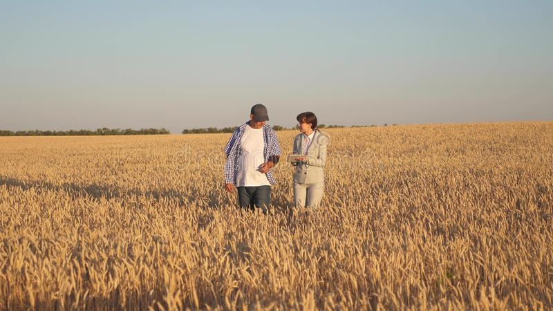 Farmer sells wheat grain to a business woman. business woman with tablet and farmer teamwork in a wheat field. Business. Farmer sells wheat grain to business royalty free stock photos