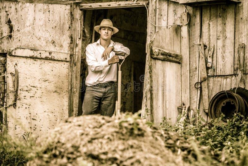 Farmer Shoveling the Horse Manure stock photo