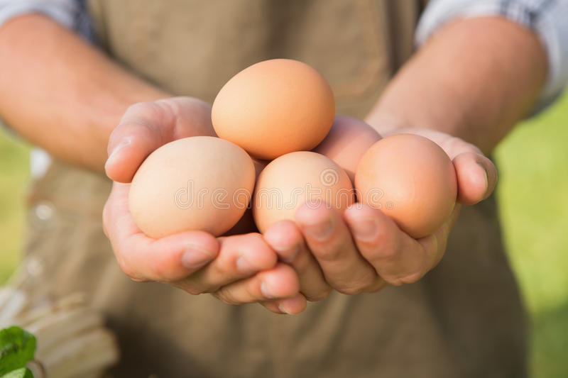 Farmer showing his organic eggs. On a sunny day royalty free stock images