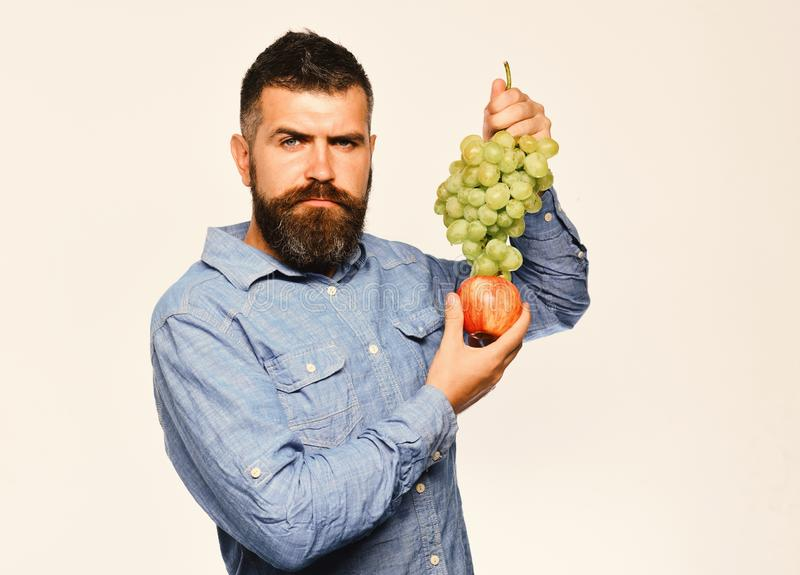 Farmer shows harvest. Man with beard holds bunch of grapes. Farmer shows his harvest. Man with beard holds bunch of green grapes and apple on white background stock photography