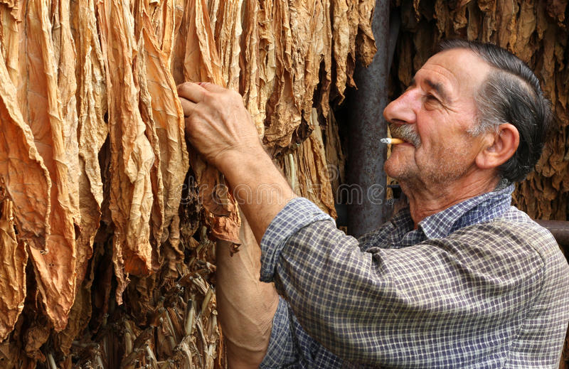 Download Farmer smokes a cigarette stock photo. Image of chewing - 18359150