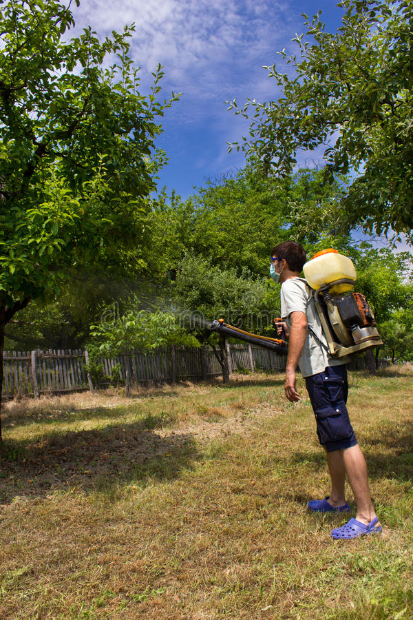 Download Farmer spraying the trees stock photo. Image of pest - 25663710