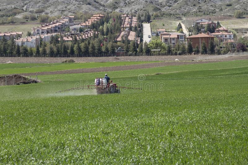 Farmer sprinkling agrochemical in his field. Summer stock image