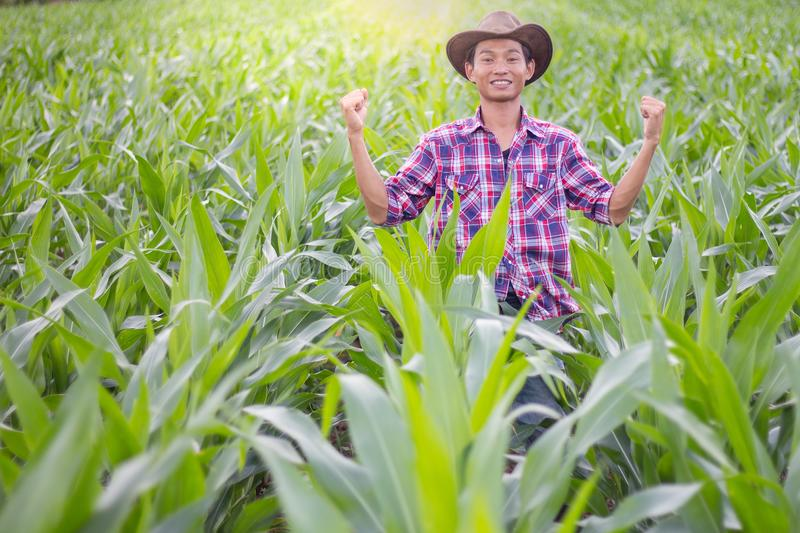 A farmer standing in a cornfield at sunset is watching his crops stock photography