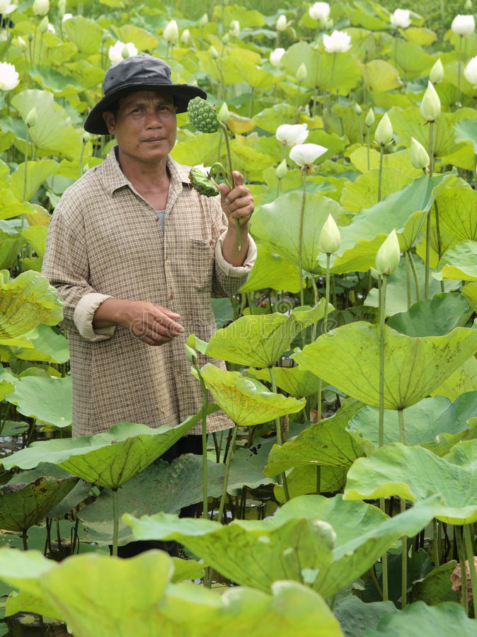 Farmer Standing In Lotus Farm Editorial Image
