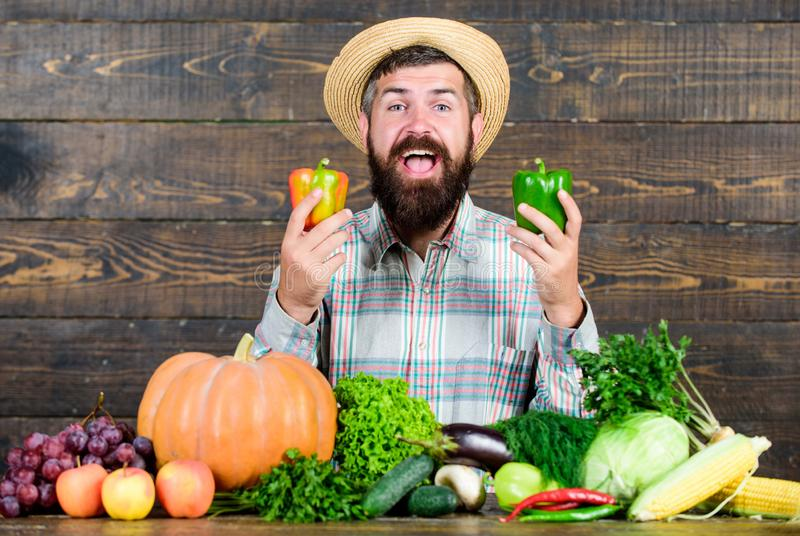 Farmer straw hat with fresh harvest. Homegrown harvest concept. Typical farmer guy. Farm market harvest festival. Sell. Vegetables. Man mature bearded farmer royalty free stock image