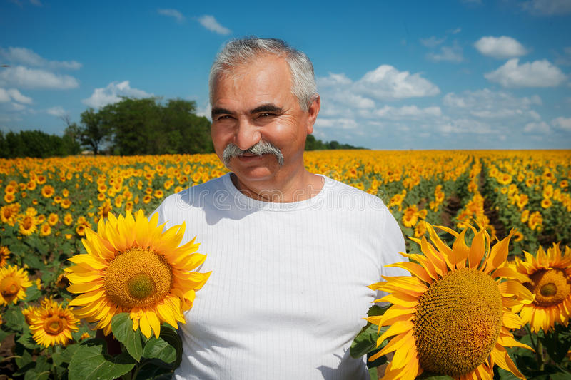 Farmer in sunflower field stock photos