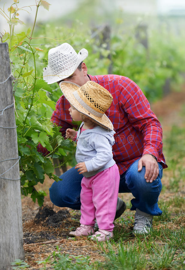 Farmer teaching child how to grow grapes royalty free stock images