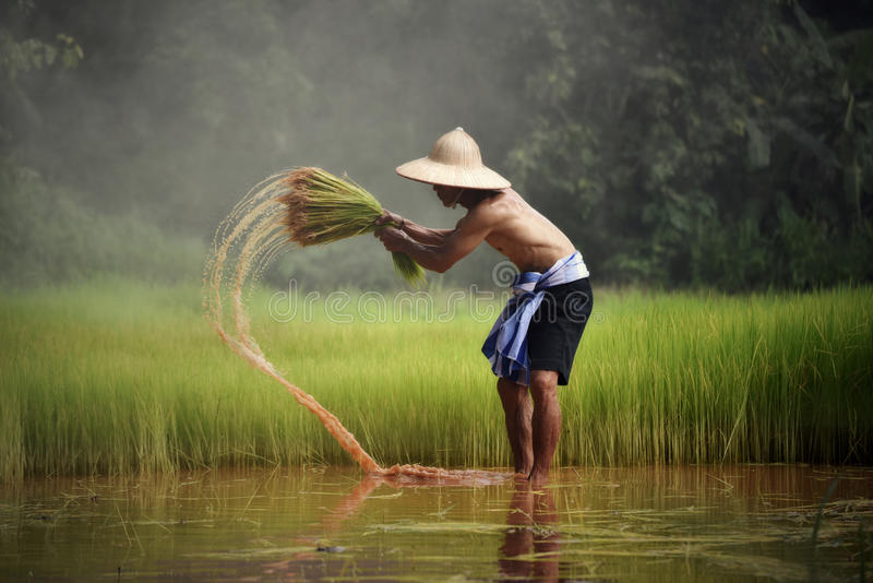 Farmer thailand royalty free stock photo