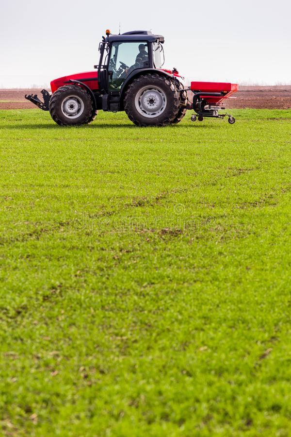Farmer in tractor fertilizing wheat field at spring with npk royalty free stock photography