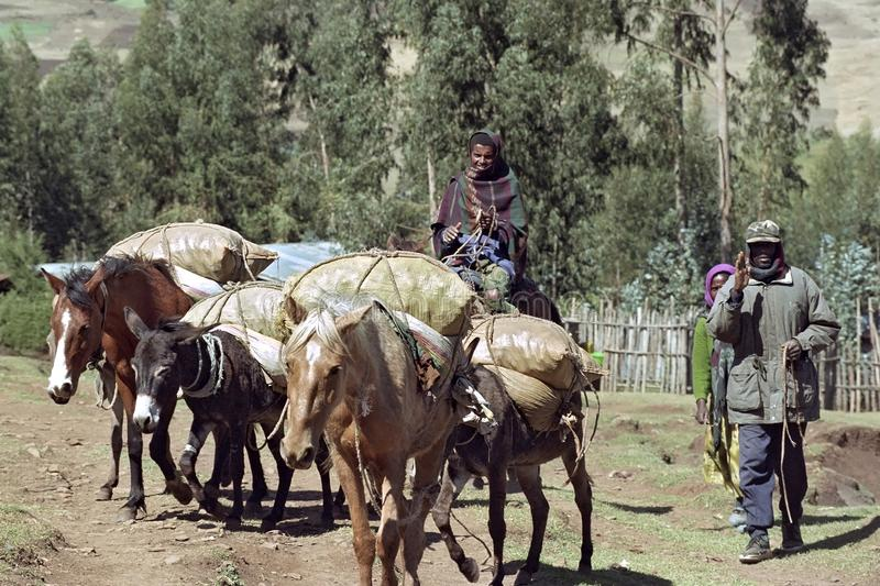 Farmer transporting grain with donkey and horses stock photography