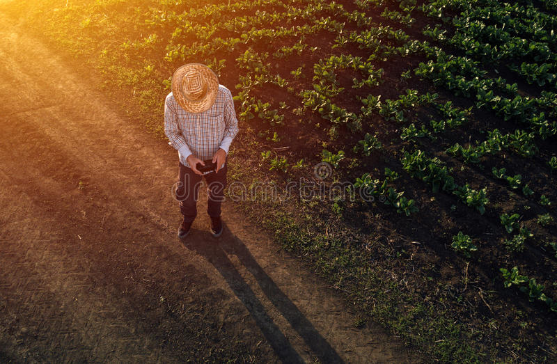 Farmer using drone in sugar beet crop field royalty free stock images