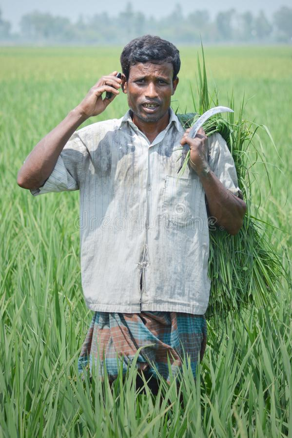 Farmer Using the Mobile Phone need for Information royalty free stock image