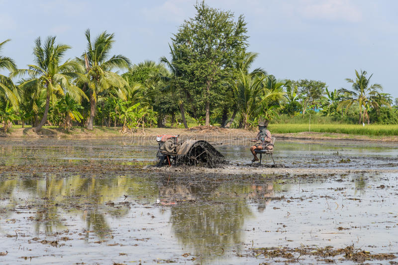 Farmer using tiller tractor in rice field stock image