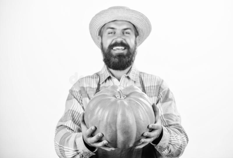 Farmer wear apron hold pumpkin white background. Agriculture concept. Farmer guy carry big pumpkin. Locally grown foods. Local farm. Farmer lifestyle stock image