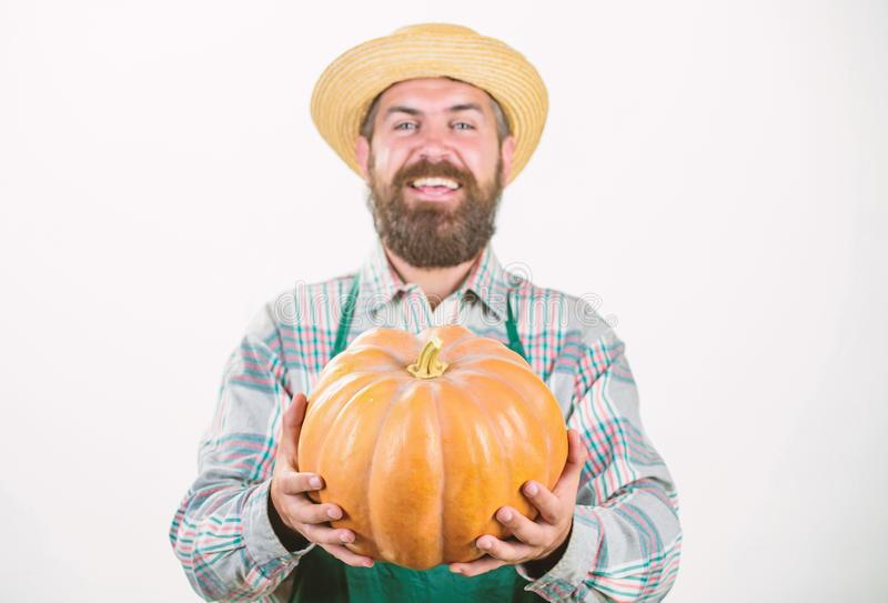 Farmer wear apron hold pumpkin white background. Agriculture concept. Farmer guy carry big pumpkin. Locally grown foods. Local farm. Farmer lifestyle stock images