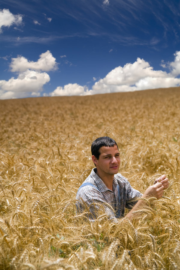 Download Farmer in a wheat field stock image. Image of blue, jeans - 5312079