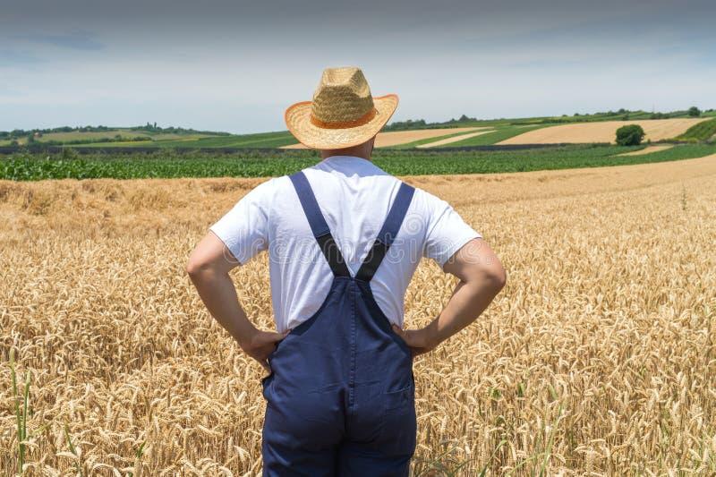 Farmer in wheat fields stock photography