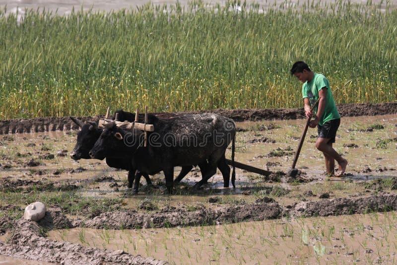 Farmer at work in Nepal