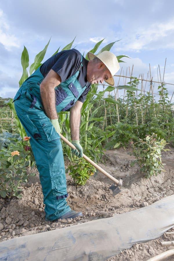 Farmer working the land stock photos