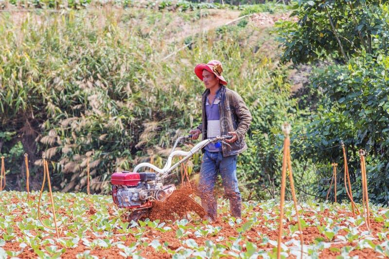 Farmer working in vegetable farm, Da Lat city, Lam province, Vietnam. Farmer working on vegetables field in vegetable farm, Da Lat, Lam province, Vietnam. Lam stock image