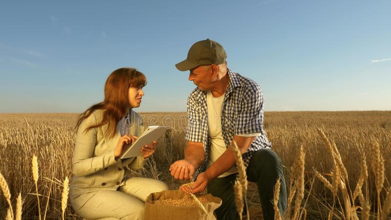 Farmers and business woman teamwork in field. agronomist and farmer are holding a grain of wheat in their hands. Farmers and business women teamwork in field stock images
